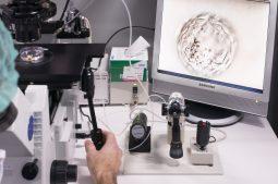 [:ar]Diagnóstico Genético Preimplantacional. Conociendo el mundo de la genética. V. 1