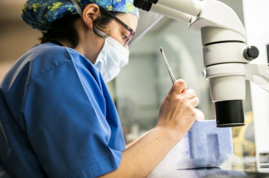 IVIRMA presents 74 studies with important findings regarding safety and success of assisted reproduction