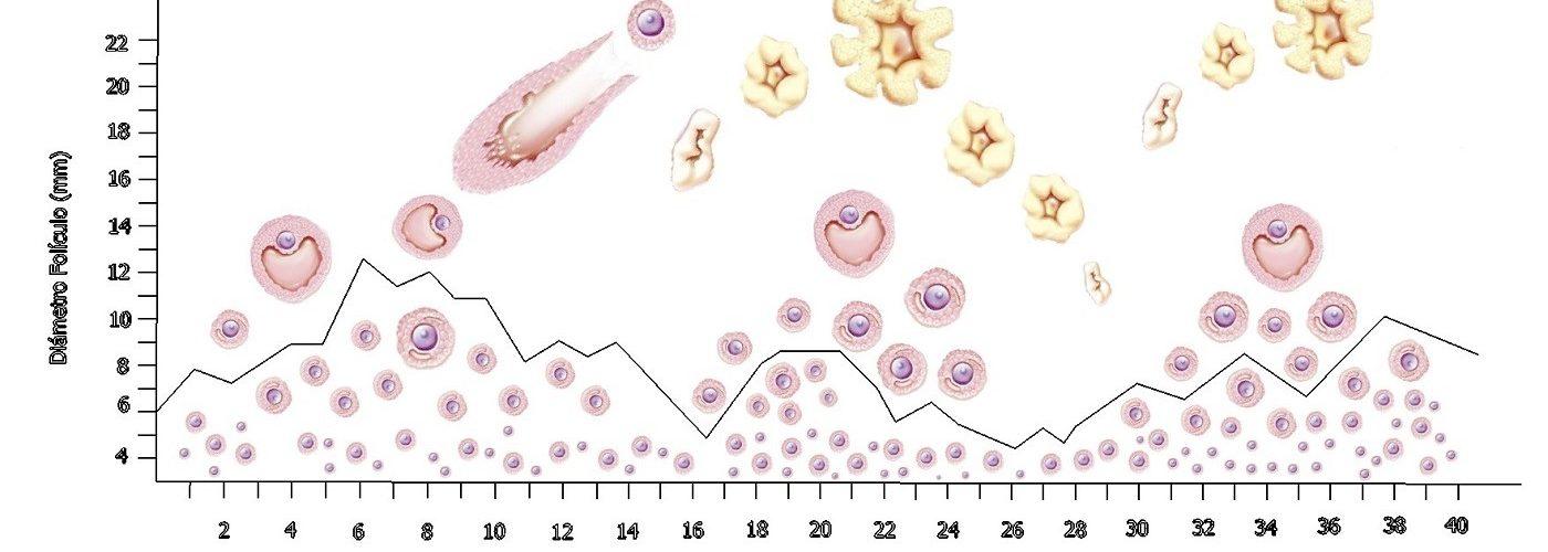 ovarian stimulation healthy embryo